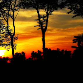 Forest Sunset by Najeeb Khan - Landscapes Sunsets & Sunrises ( najeeb, silhouette, sunset, twilight, silhouettes, forest, yellow, evening, fading light )