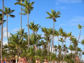 """Photo: Эта часть Доминиканы называется """"Кокосовый берег"""". Как видно, не зря:)"""