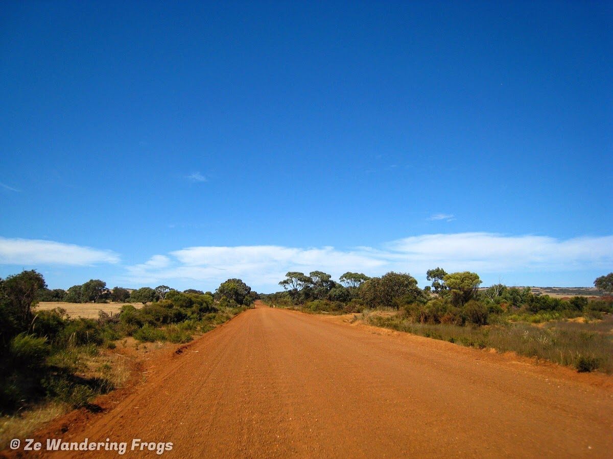 Driving on the North Shore Road for a taste of Australian outback