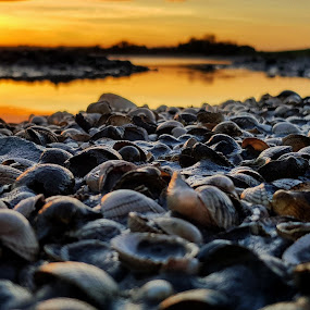 Seashells way by Mariusz Murawski - Nature Up Close Other Natural Objects ( #landscape, #island, #shells, #nature, #lough, #sea, #sky, #sunset,  )
