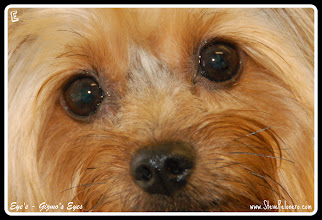 """Photo: A to Z  2011-09-24  Week 5 - Day 35 Saturday's """"E""""  Eyes"""