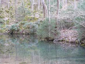 Photo: Goldfish pond