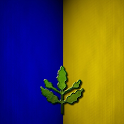 nn Fenerbahçe Duvar Kağıdı icon