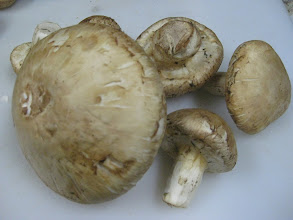 Photo: Matsutake/ Pine mushroom