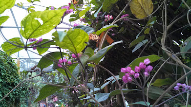 Photo: Day 3: Mariposas de Mindo, inside the santuary you could put fruit on your hands and try to get the butterflies to land on you.
