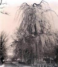 Photo: Hoofdstraat met treurboom bij pastorie