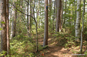 Photo: Sunlight on a trail at Brighton State Park