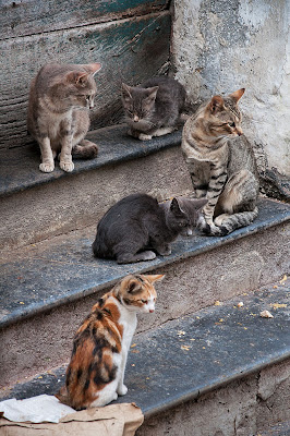 the cats di dady2
