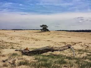 Photo: Nederland - Natuur - De Veluwe Foto: Yvonne Rikkenberg