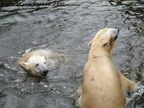 Photo: Gianna will doch nicht etwa schon wieder aus dem Wasser ;-)