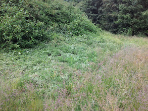 Photo: After:  by butterfly mound