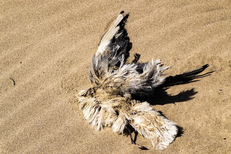 sabbia mobile di antography