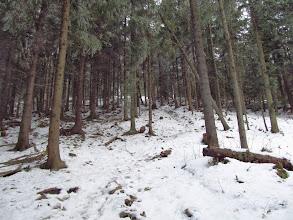 """Photo: 13.Pod szczytem Szczebla, gdzieś koło 800 m n.p.m., robi się wreszcie zima, albo raczej taka """"zimka"""", bo śniegu tutaj jak na lekarstwo ;) Jest za to strasznie ślisko."""