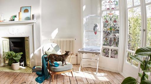 Un gatto è su una sedia in salotto, crogiolandosi al sole.