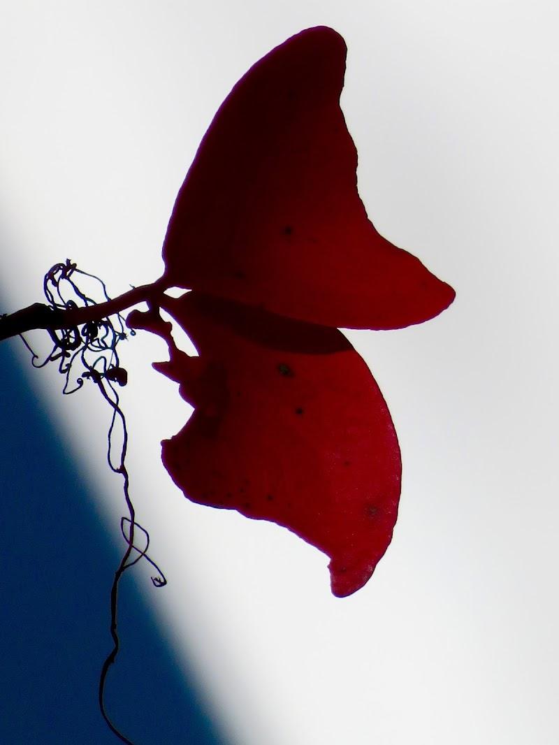 fogliafarfalla di mariellaturlon