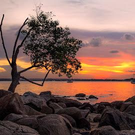 by Gordon Koh - Landscapes Sunsets & Sunrises ( water, changi, sunset. lonely tree )