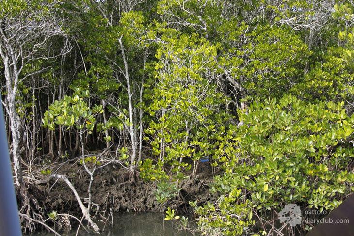Tropical North Queensland Trip 3 Port Douglas Crocodiles Hunting ล่องเรือชมจระเข้
