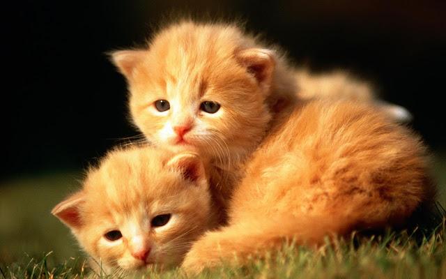Cats Tab