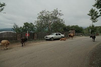 Kühe und Schweine gehören, wie selbstverständlich, zum Straßenbild.