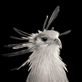 by Judy Rosanno - Black & White Animals ( november 2017, san antonio zoo )