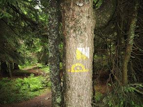 Photo: 24.Ja tymczasem zbaczam trochę ze szlaku żeby zobaczyć jaskinię Zbójecką jamę.