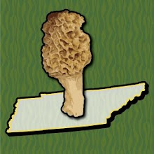 Tennessee Mushroom Forager Map Morels Chanterelles Download on Windows