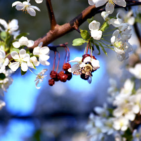 Bees everywhere by Andy Bigelow - Flowers Tree Blossoms