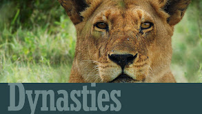 Planet Earth: Dynasties thumbnail