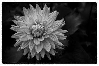 Photo: Conservatory of Flowers #1 - © Ricardo Lagos - Creative Commons (CC BY-NC 3.0)