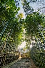 Photo: A path through a small bamboo grove in Matsudo, Chiba Prefecture, Japan