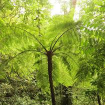 Flora de PN Azul Meambar--PANACAM Lodge