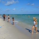 portugese men of war, be very cautious, venomous in Miami, Florida, United States
