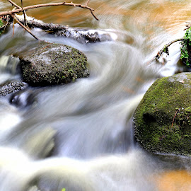 Water by Gil Reis - Nature Up Close Water ( water, life, bio, nature, forest, places )