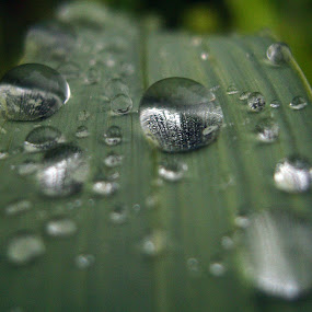 Lot of waterdrops by Muhammad Muqri - Nature Up Close Flowers - 2011-2013