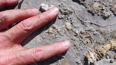 Photo: Fossils on ridge to Willow Mountain