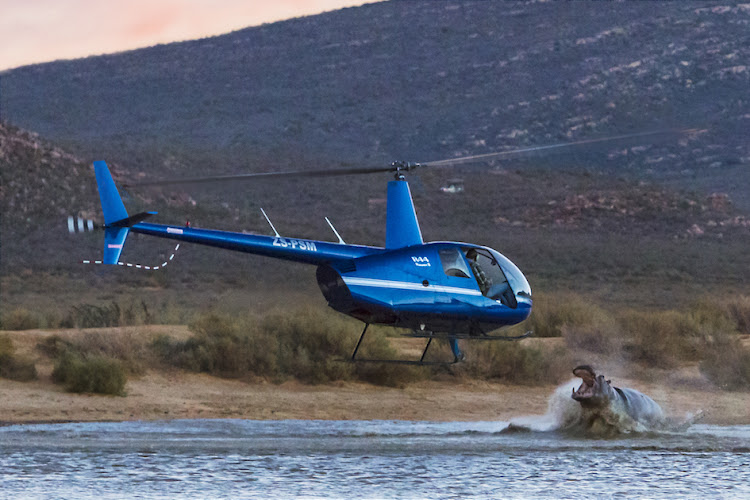 Personnel from Aquila Private Game Reserve successfully relocated a 1.5-ton rogue male hippopotamus during a special operation. A photographer captured the moment the hippo launched itself from underwater and attacked the airborne helicopter, surprising the crew who did not even realise they were on top of the animal.