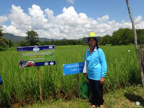 Photo: Mrs. Rin Pama, Huatung village, Bansiaw sub district, Fak Tha district, Uttaradit province