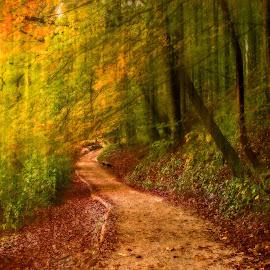 I'll Be Back by Bojan Bilas - Digital Art Places ( forest, color, fine art, long exposure, scenic, trees, mist, beautiful, fall, nifty fifty, moody, plitvice, europe, park, hrvatska, nature, woods, tree, misty, idylic, croatia, foliage, light, autumn, plitvice lakes, travel, landscape, fog )