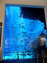Photo: aquarium