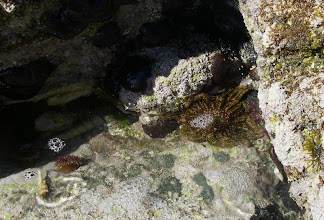 Photo: Tidepool inhabitants.