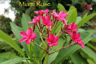 Photo: Miami Rose