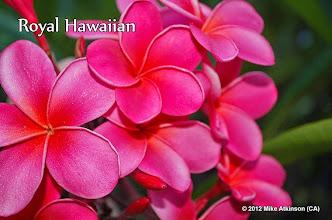 Photo: Royal Hawaiian - San Diego, CA - East San Diego county