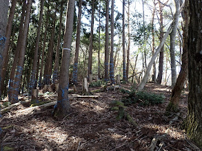 林道から尾根へ戻る