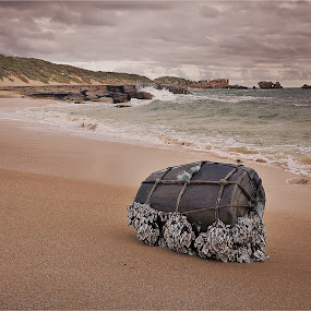 Washed Ashore  by Isabella Farrell Kym Matthews - Landscapes Beaches