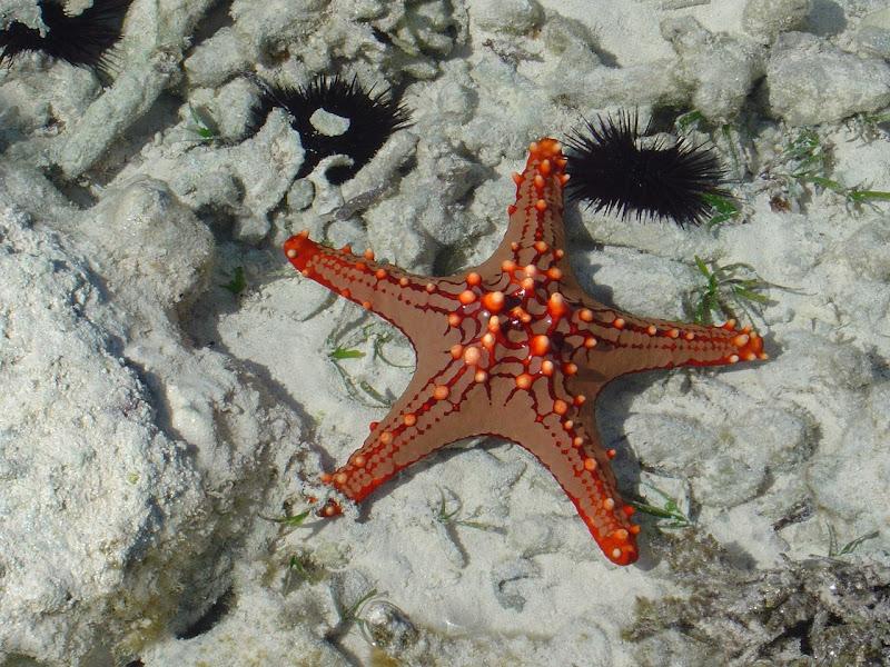 ...rosso nel mare... di Nikaele
