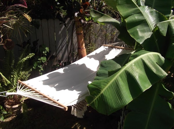 PS:  i love the banana leaves.  i love to draw pictures of...