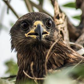 by Mohsin Raza - Animals Birds (  )