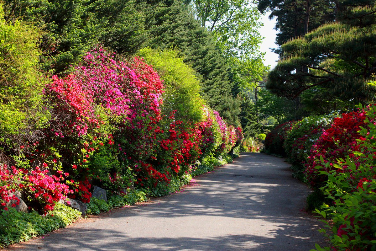 real flower road