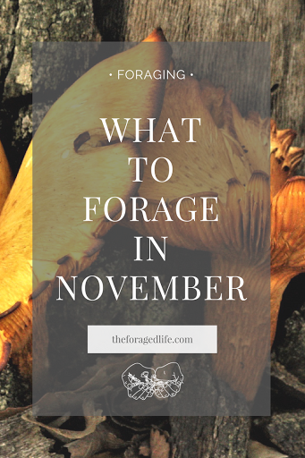 What to forage in November | A guide by The Foraged Life