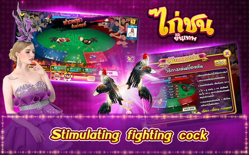 Casino Thai Hilo 9k Pokdeng Cockfighting Sexy game modavailable screenshots 2